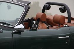 Click to view album: Triumph Dogs!